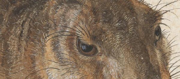 Albrecht_Dürer_-_Hare,_1502 front