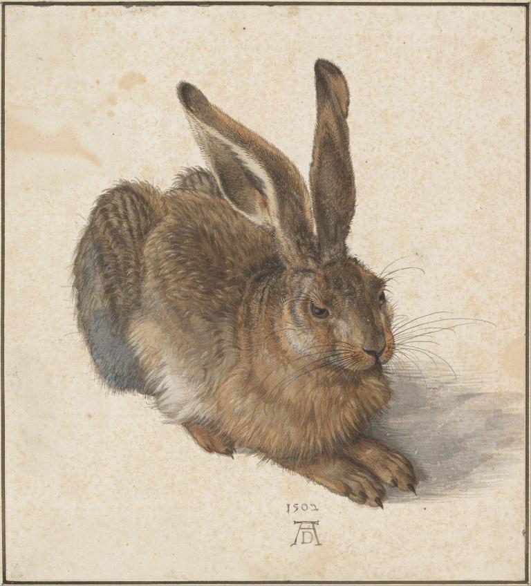Albrecht Dürer - Hare, 1502.